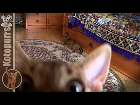 Cat's carpet scary movie (watch till the end!!!) [kotopurrs]