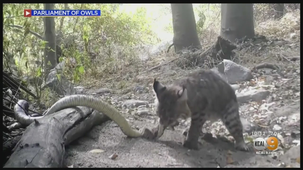 Wildlife Photographer Captures Dramatic Scenes From Angeles National Forest