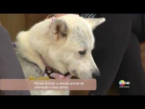Mundo Animal: a relação animal de estimação e seus donos