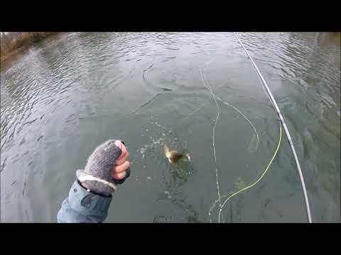 Fly Fishing Winter Smallmouth In Missouri
