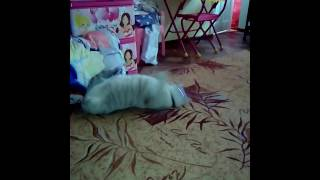 Напоил кота валерьянкой)))