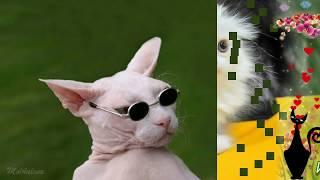 Кошки и коты - презентация - песни для детей
