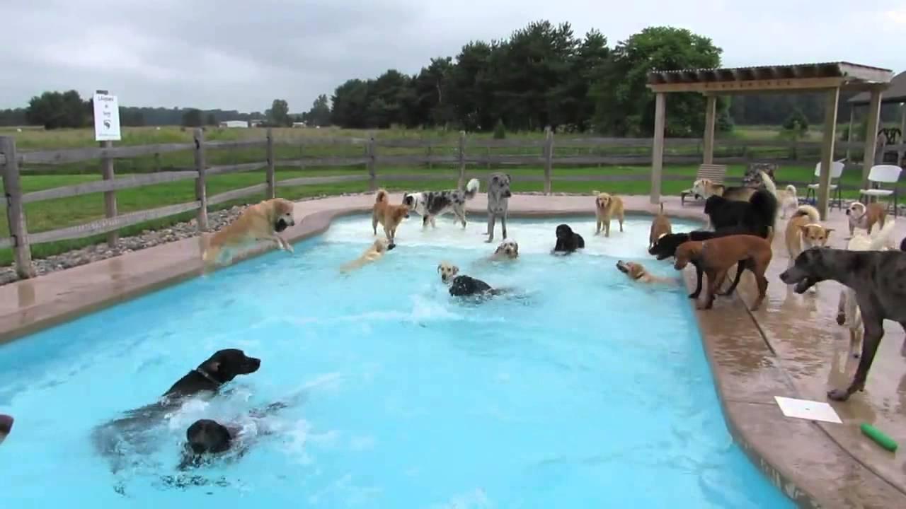 Muchos perros en la picina youtube for Piscina para perros barcelona