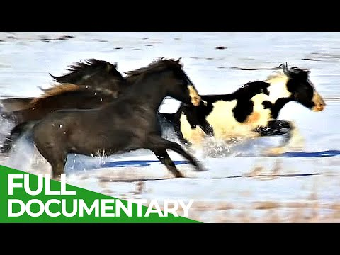 8000 Miles to Alaska: A Journey Along the Longest Border in the World | Free Documentary Nature