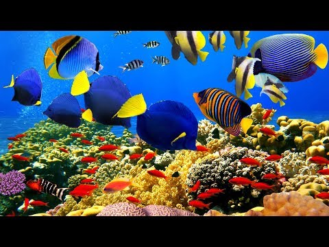 4K- The most beautiful coral reefs and undersea creature on