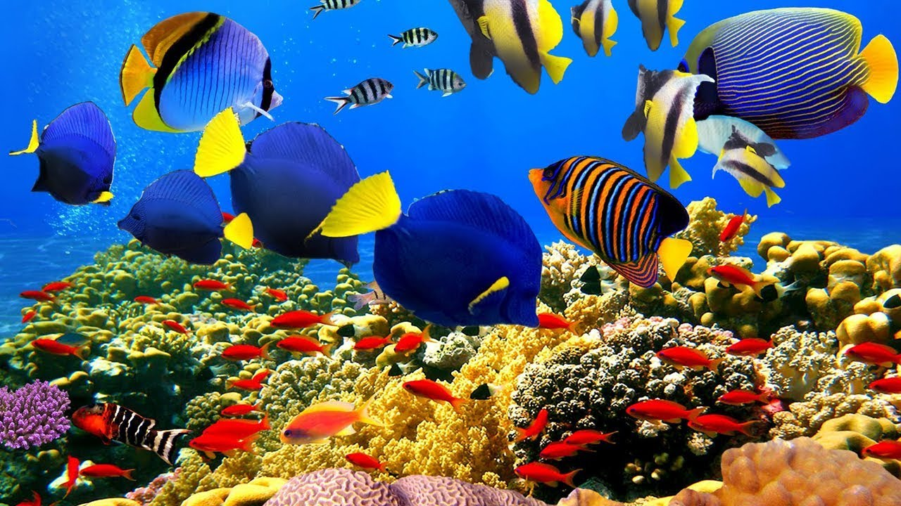4K- The most beautiful coral reefs and undersea creature on earth