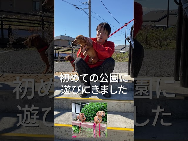 「ワンちゃん大好き」ミニチュアダックスフンド リンクス大船 島村