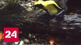 Россиянин устроил побег из колумбийского плена с перестрелкой: Рэмбо завидует