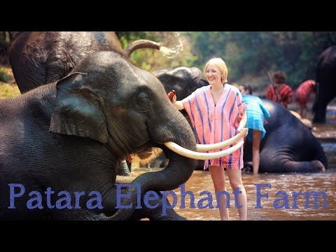 Patara Elephant Farm - Chiang Mai, Thailand