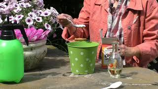 Как спасти огурцы от пероноспороза