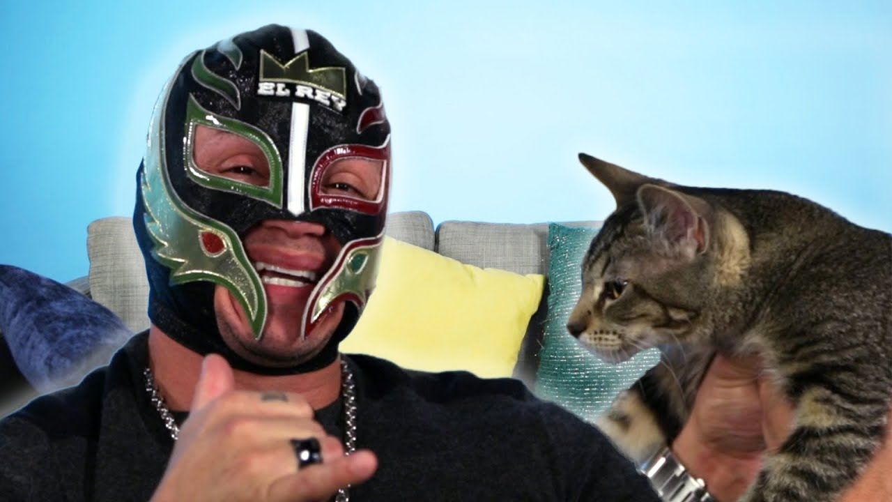 Lucha Libre Youtube Rey Mysterio Gets Surprised With Rescue Cats