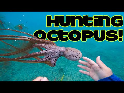 Diving For Octopus In Hawaii Catch And Cook | Diving In Hawaii |Fishing In Hawaii | Hawaii Fishing