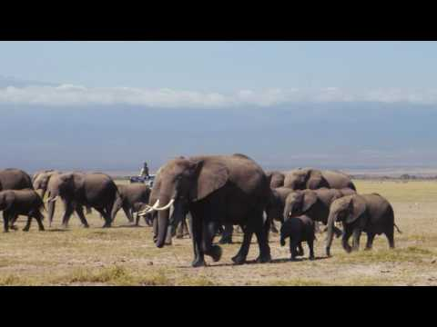 Kenya Airways and Born Free Foundation for Wildlife