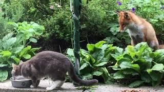 今日も会いに来てみたよ!お花に囲まれたキツネと猫のやさしい時間