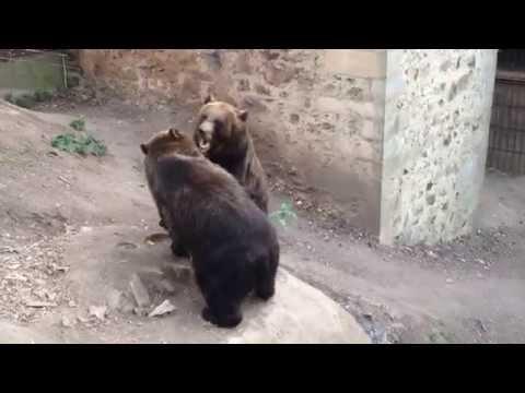 Medvědi Agáta a Martin z večerníčku Méďové na cestách