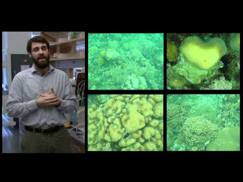 Researchers Study Coral Growth in Mesoamerican Barrier Reef