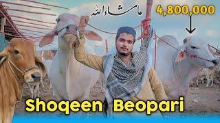 Shouqeen Biopari   Bakra Eid Special   Karachi Cow Mandi 2021 - Vines Dot Com