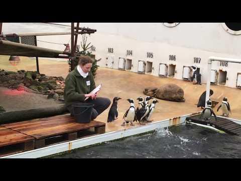 Inventur im Erlebnis-Zoo Hannover