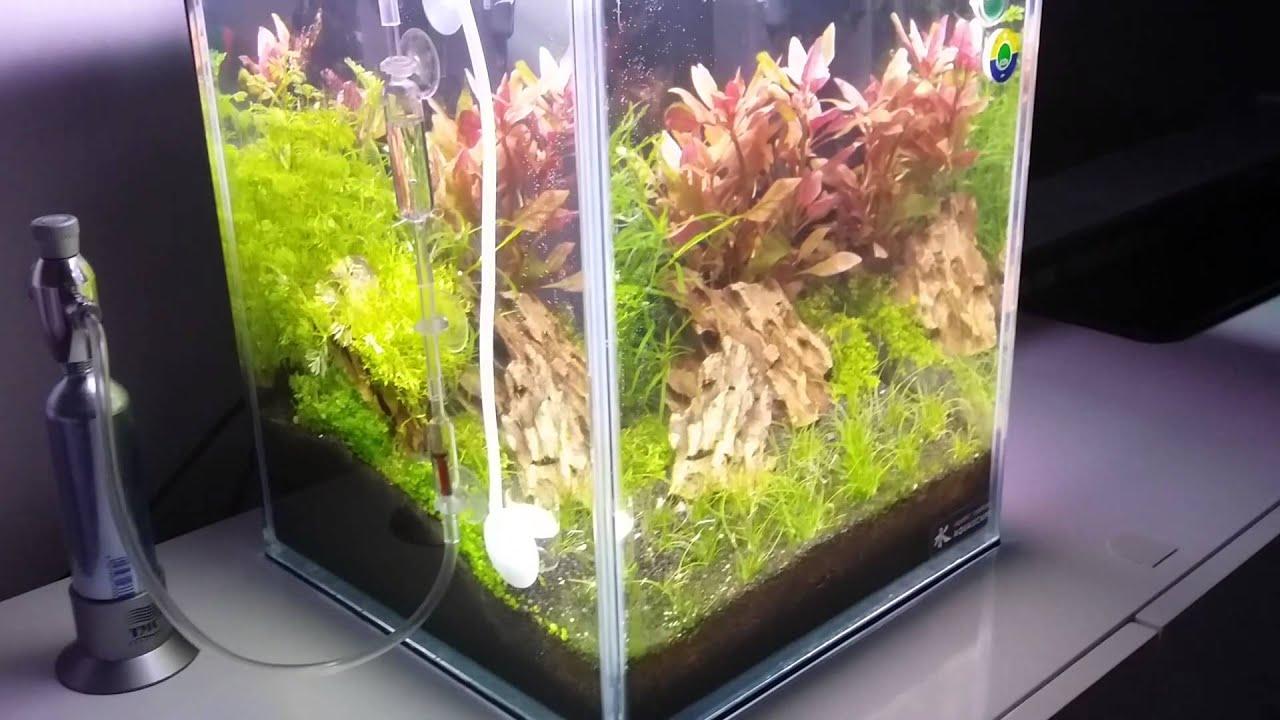 nano aquascape(aquagro) - YouTube