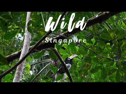 Wild Singapore - Parks & Nature Reserves