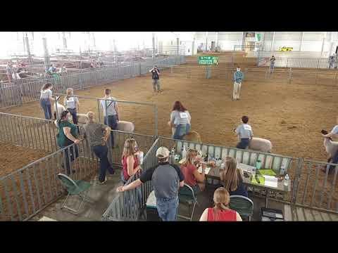 4-H & FFA Sheep Show at 2020 Lancaster County Super Fair