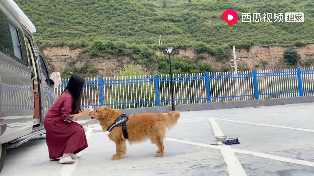 测试狗狗能不能听懂主人的话,看看大白是不是成精了