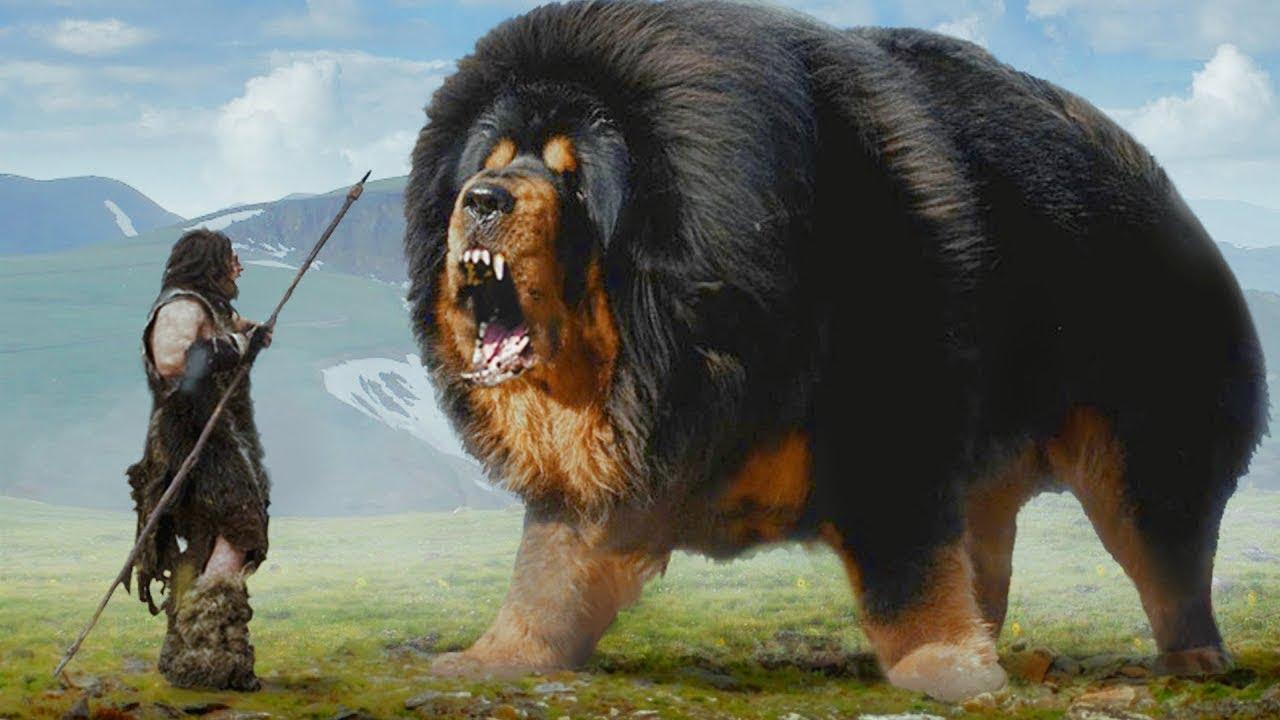 दुनिया के सबसे ख़तरनाक कुत्ते | World Dangerous Dog    | |  Khatarnak kutte