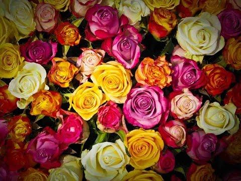 Jamshedpur Flower Show 2016