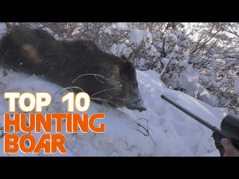 Wild Boar Hunting Top 10 Amazing Kill Shots And Charges/attacks 2019