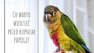 Co warto wiedzieć przed kupnem papugi?