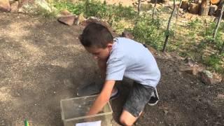 The Kritter Kid demonstrates the Habitat of a Horned Lizard