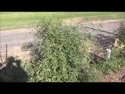 Attention Spokane WA Area - Eastern WA - Back to Eden Garden Update #4 - L2Survive with Thatnub