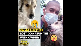 Lost dog reunites with owner