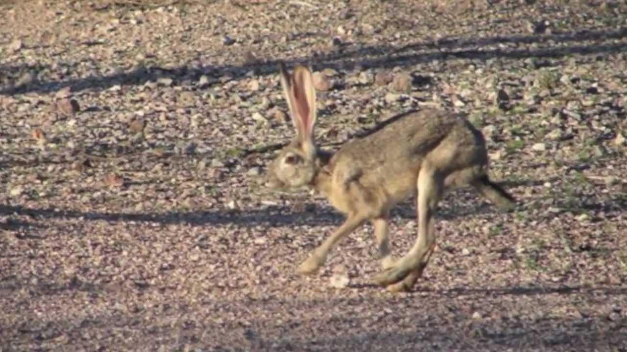 hot desert biome climate