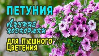 Чем ПОДКОРМИТЬ ПЕТУНИЮ для ОБИЛЬНОГО цветения. Тонкости и нюансы ПОДКОРМОК