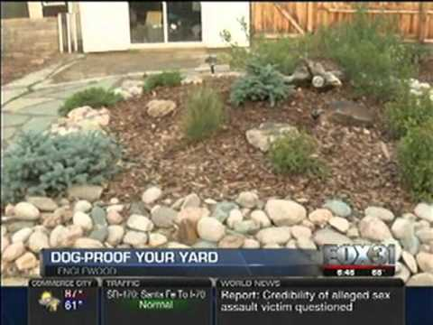 Build A Dog Friendly Backyard (Fox 31)