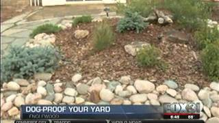 Build A Dog-friendly Backyard (fox 31)