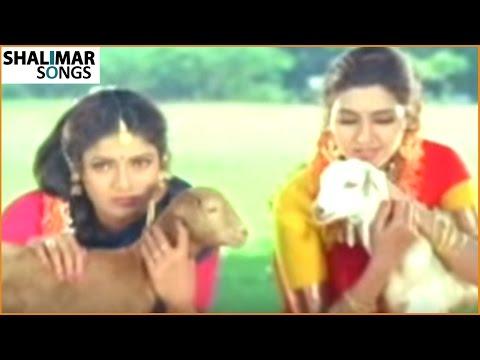 Nava Manmadhuda Video Song || Pelli Sandadi Movie ||    Srikanth,Srikanth, || Shalimar Songs