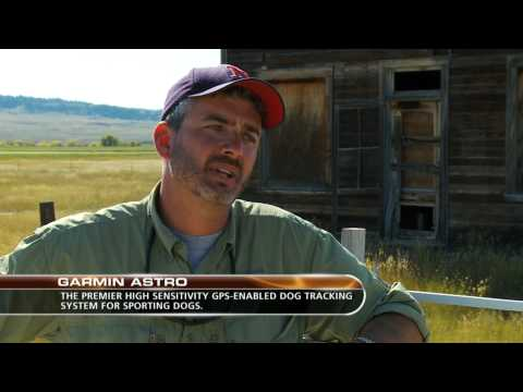 Montana Upland Game Bird Hunting
