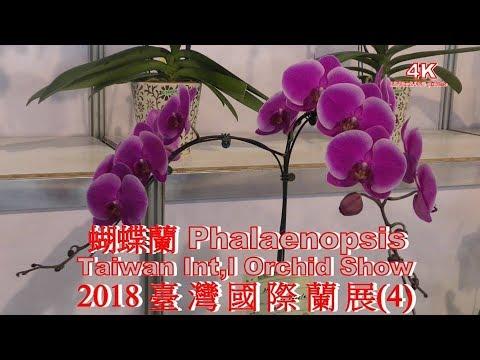 (4K) 2018 臺灣國際蘭展(4) 蝴蠂蘭 Phalaenopsis. Taiwan Int'l Orchid Show.4K Ultra HD