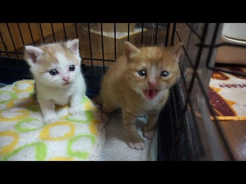 可愛すぎる子猫の成長記録 生後一か月から1歳になるまで