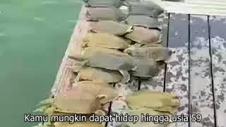 Melepaskan/fangshen pio Mp3