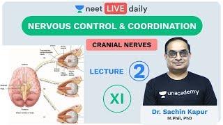 Neural Control and Coordination - L2  Unacademy NEET  LIVE DAILY  NEET Biology  Dr. Sachin Sir