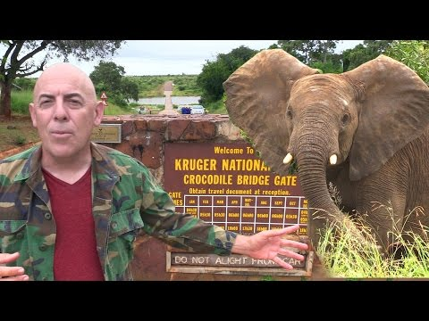 A Day in Kruger National Park - Elephants, Giraffes, Hippos, Baboons