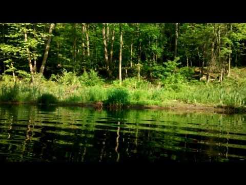 Fawn In The Creek!