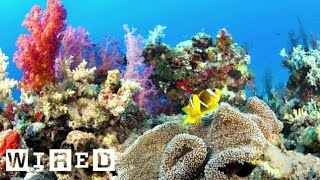 How Coral Reefs And Carbon Dioxide Can Change The Future | Think Like A Tree