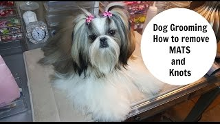 Dog Grooming -How to remove Mats and Knots