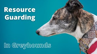 Resource Guarding in Greyhounds