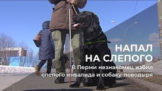 В Перми незнакомец избил слепого инвалида и собаку-поводыря