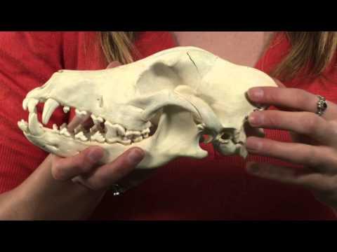 Dino 101: Dinosaur Paleobiology with Philip John Currie and Betsy Kruk